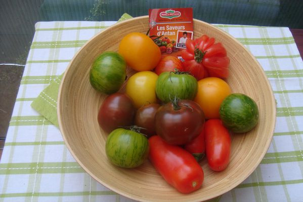 0000 tomates anciennes (4)
