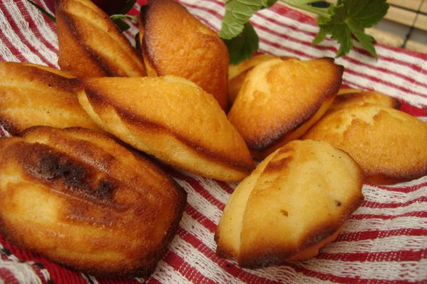 5 madeleines pamplemousse 1