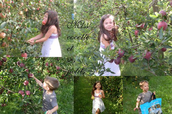 ramassage-de-pommes-2013.jpg
