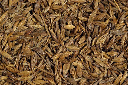 grain_emmer_detail.jpg
