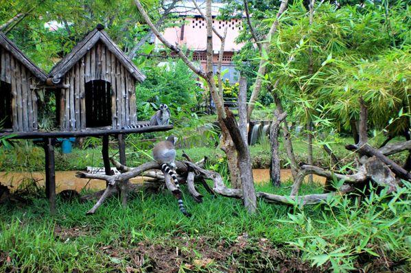 Lemuria park (8)