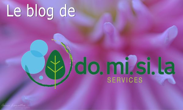 Blog domisila services