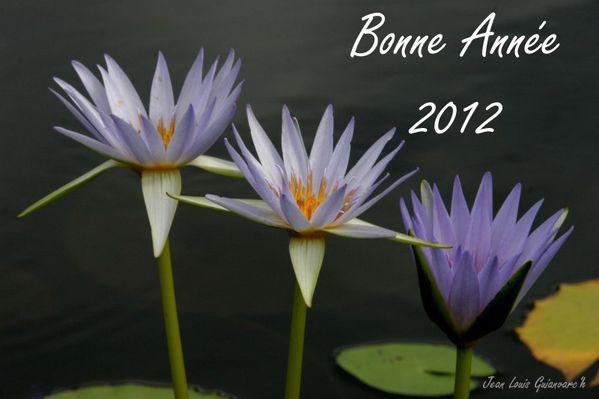 Lotus-bleus-copie.jpg