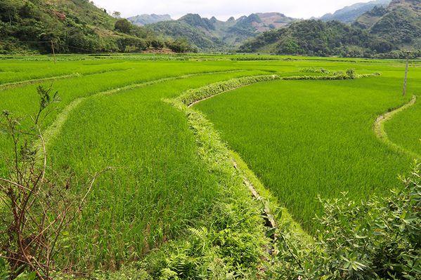 Vietnam__1558w.jpg