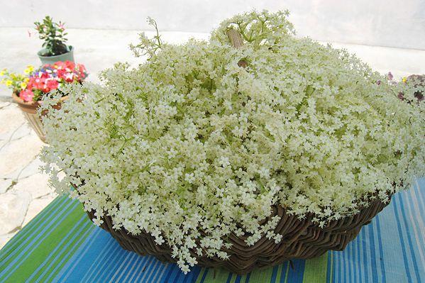 panier-fleurs-sureau.jpg