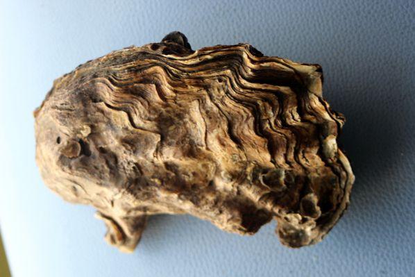 Curiosites-0979.JPG