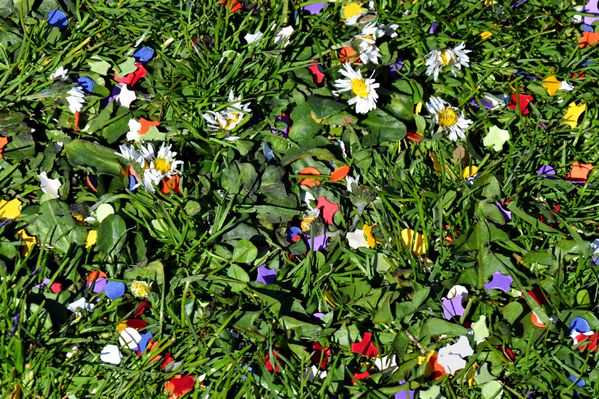 fleurs-du-carnaval-3.jpg.psd-version-2.jpg