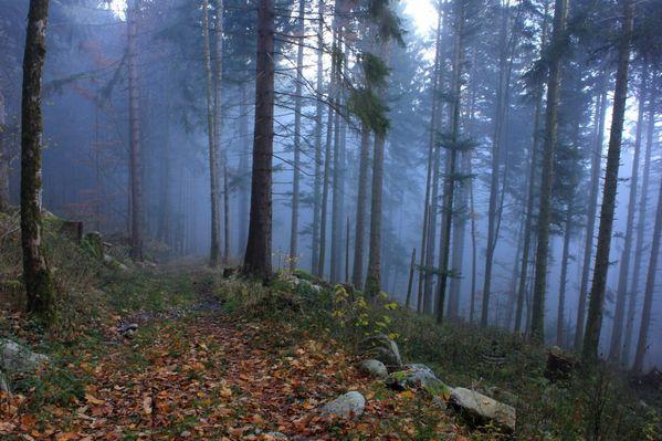 Hautes-Vosges 0939 (FILEminimizer)
