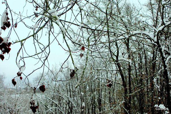 x06---Arbres-sous-la-neige.JPG