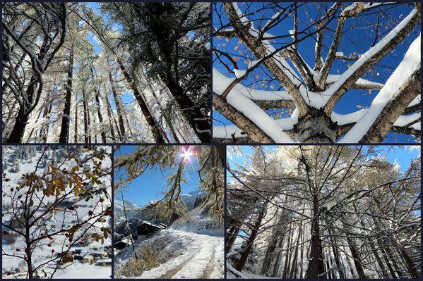 2012-11-05 Toussains 20122