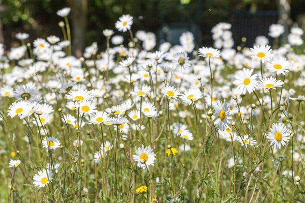 Fleurs-printemps-105.jpg