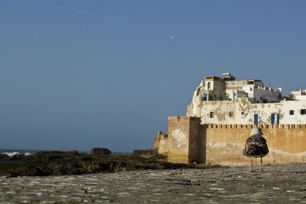 19-03---Essaouira-32.jpg