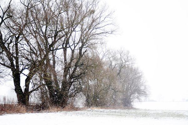 SchneegestoeberDSC 1150
