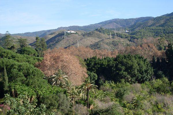Jardin Botanique de Malaga 070