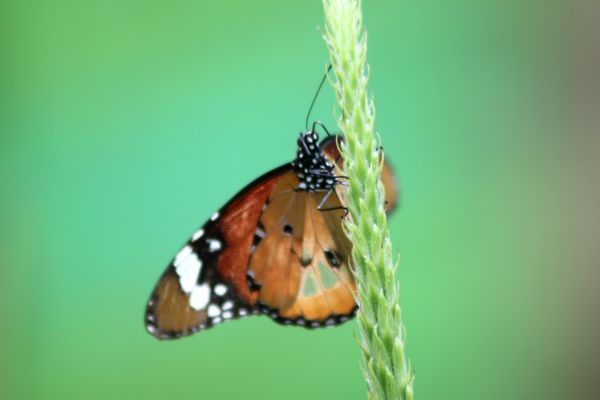 animaux-papillon 4219
