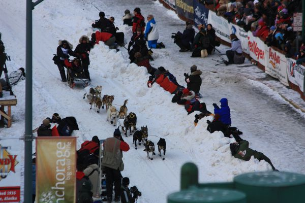 course-chien 6466