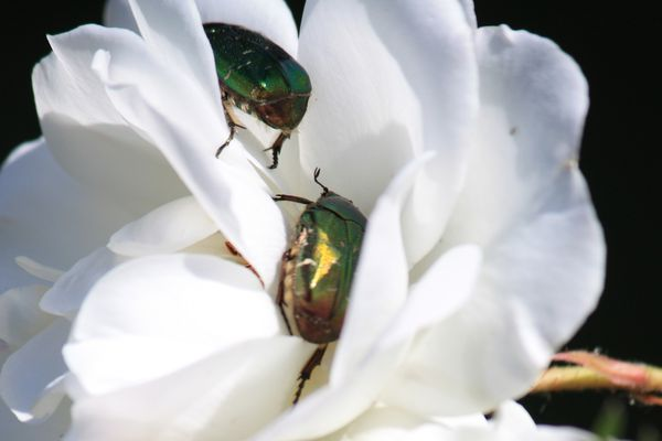 insect2