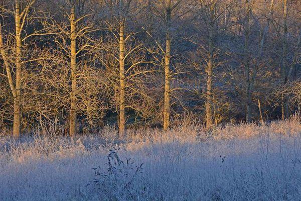 Givre-neige-6-3669_modifie-1.jpg