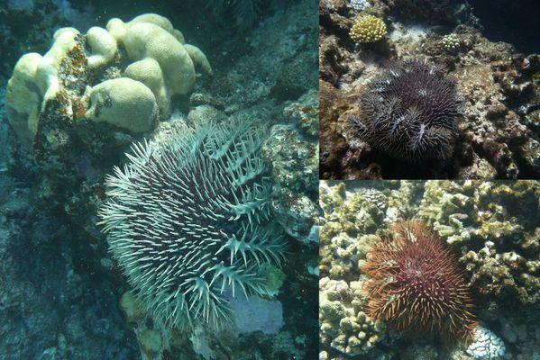 Sortie-aquanature-21-011.jpg