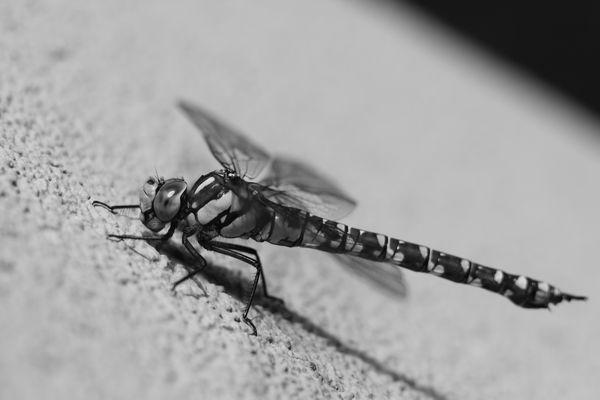 macros-insectes 3758