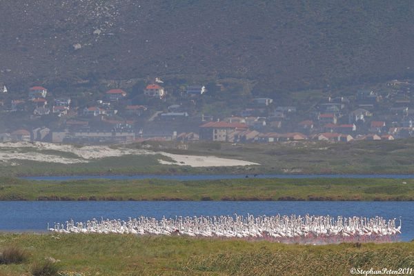 FlamantroseWesternCape.1.08-11.jpg