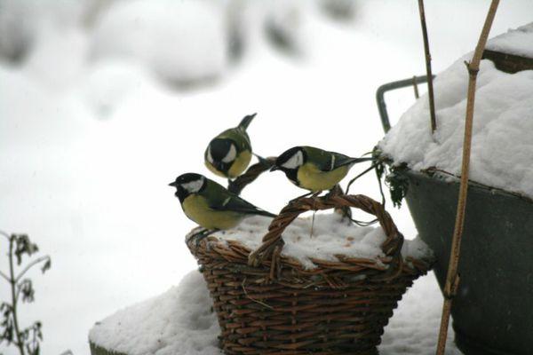 Janvier-2011-6133--DVD--PAL--.JPG