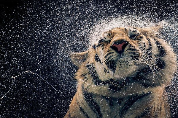 Tim-Flach-14.jpg