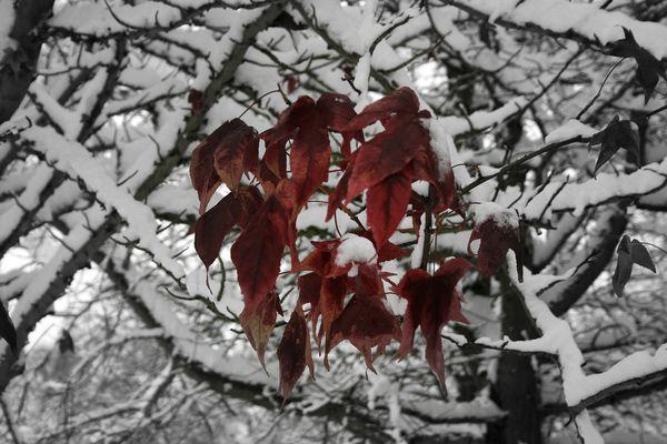 la-nature-et-l-hiver-9119.JPG