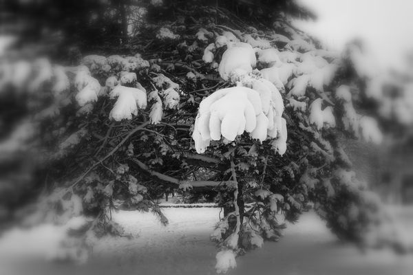 la-nature-et-l-hiver-9125.JPG