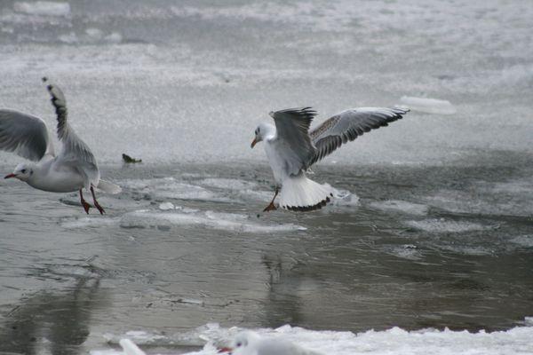 les-oiseaux-au-bord-de-l-eau-4811.JPG