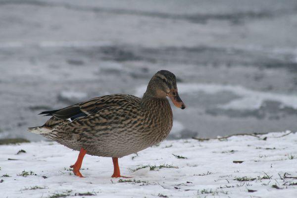 les-oiseaux-au-bord-de-l-eau-4825.JPG