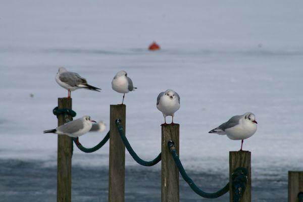 les-oiseaux-au-bord-de-l-eau-4874.JPG