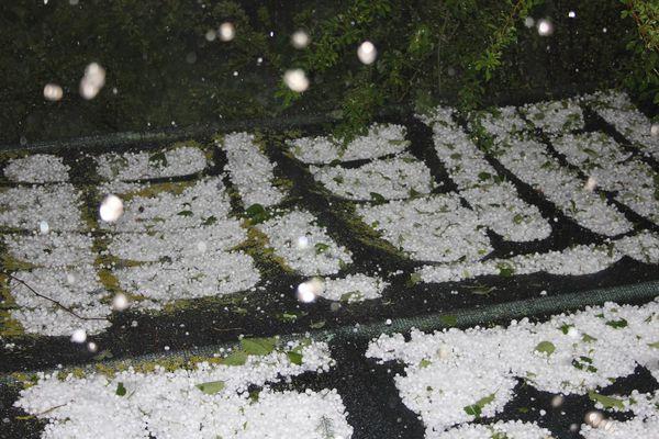 fiore-pentecote-27.5.12-020--Copier-.jpg