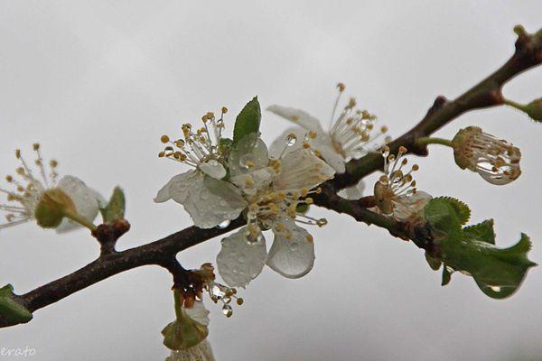 fleurs-040a.jpg