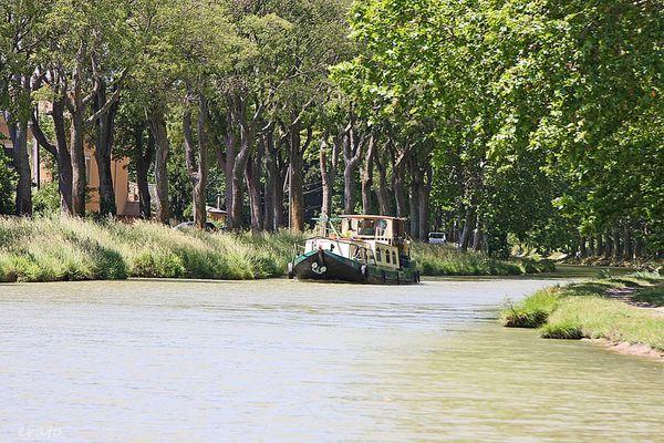 14-juin-2012---promenade-canal-du-Midi-015a.jpg