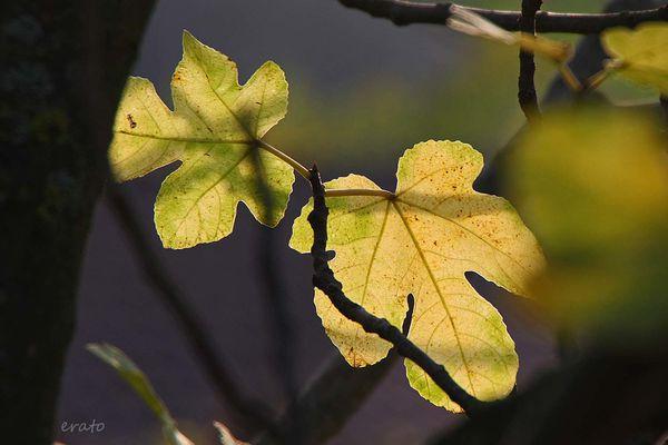 champignons-feuilles-003a.jpg