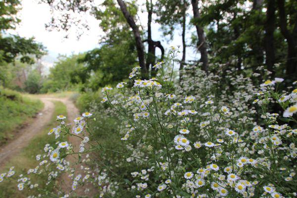 Fleurs-2921.jpg
