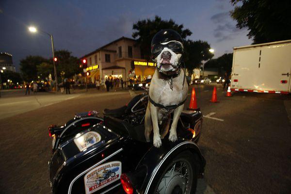 sem13aoul-Z4-Pret-a-partir-pitbull-side-car-Los-Angeles.jpg