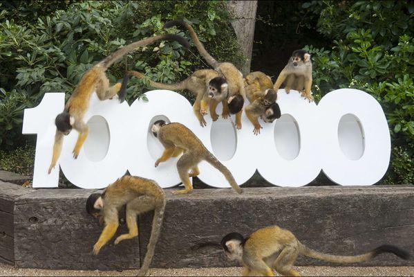 sem14octa-Z1-100-000-membres-et-moi-et-moi-et-moi-zoo-Londr.jpg