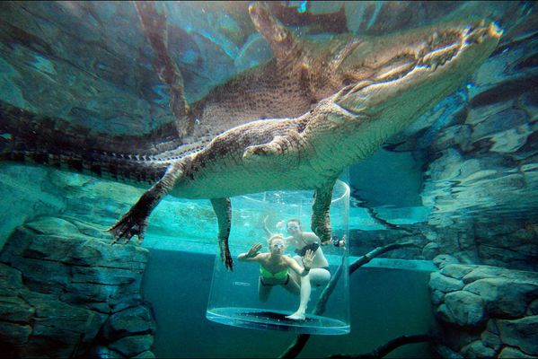 sem14novj-Z13-Darwin-en-Australie-avec-les-crocodiles-geant.jpg