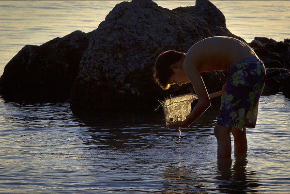 sem14decd-Z6-Dans-l-eau-peche-crevettes-Floride-USA.jpg