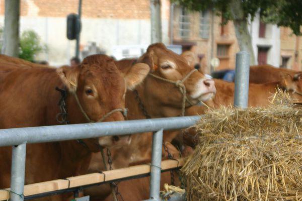 2011_aout-journees-agricoles-du-volvestre-003.jpg