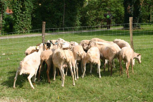 2011_aout-journees-agricoles-du-volvestre-022.jpg