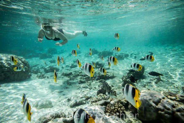 Polynesie-Francaise-8345B.jpg