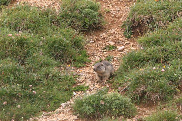 100730 Marmottes (2)