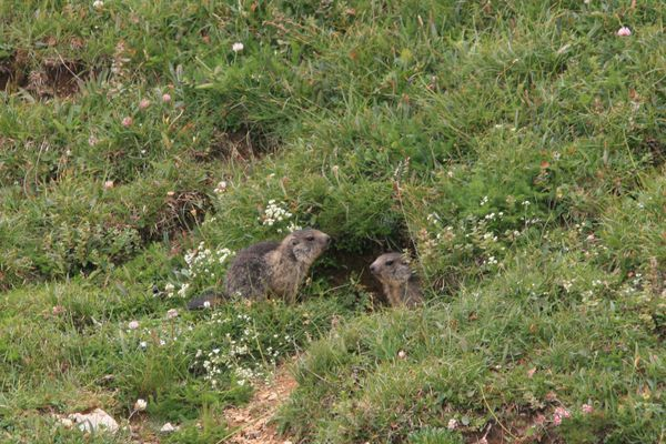 100730 Marmottes (4)