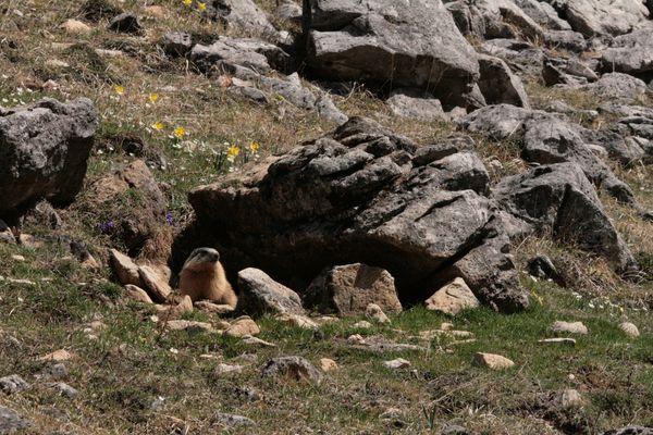 110408 Marmottes 301