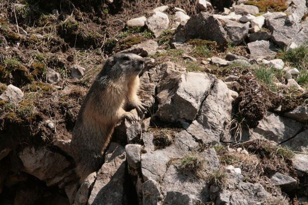 110416 Marmottes 027