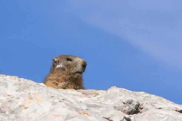 110701 Marmottes 015