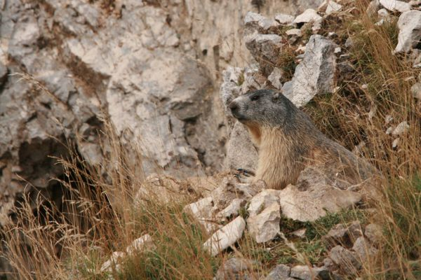 110825 Marmottes 014